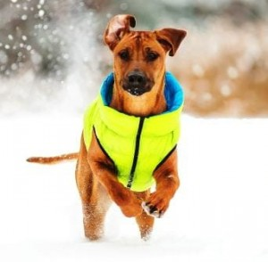 Jacket for Dog Airy Vest - Kurtka dla psa Roz. L-55